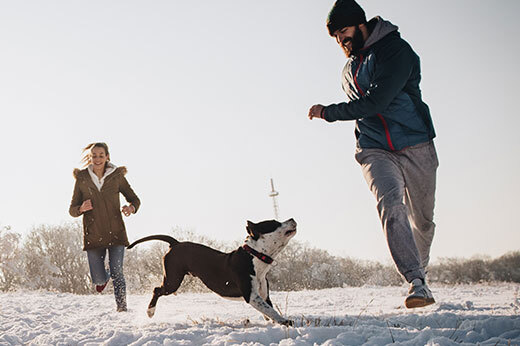 Dog and People running around in snow