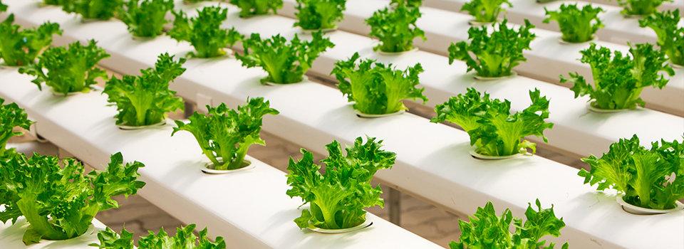 960x350-hydroponics.jpg?Revision=gSGY&Timestamp=3nYJqG