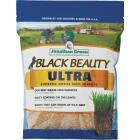 Jonathan Green Black Beauty Ultra 1 Lb. 200 Sq. Ft. Coverage Tall Fescue Grass Seed Image 1